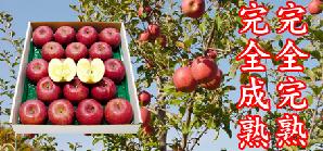 りんごや2